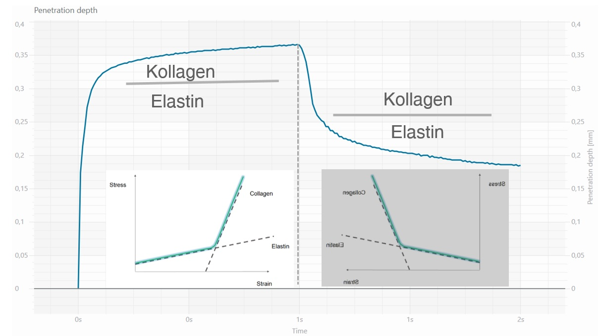Cutometer® typische Messkurve Kollagen vs Elastin